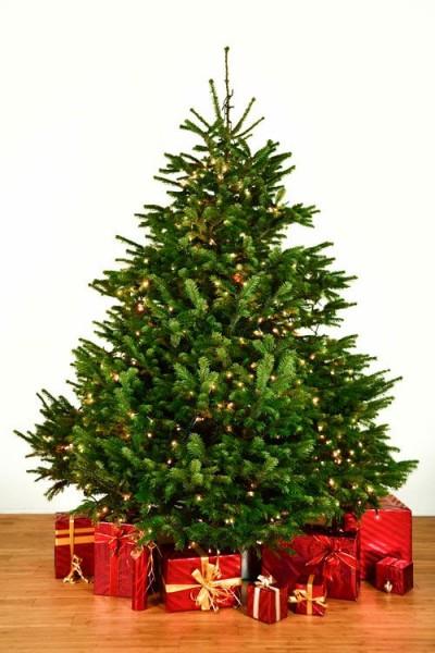 Dekorierter Weihnachtsbaum 3,0 m mit Lichterketten